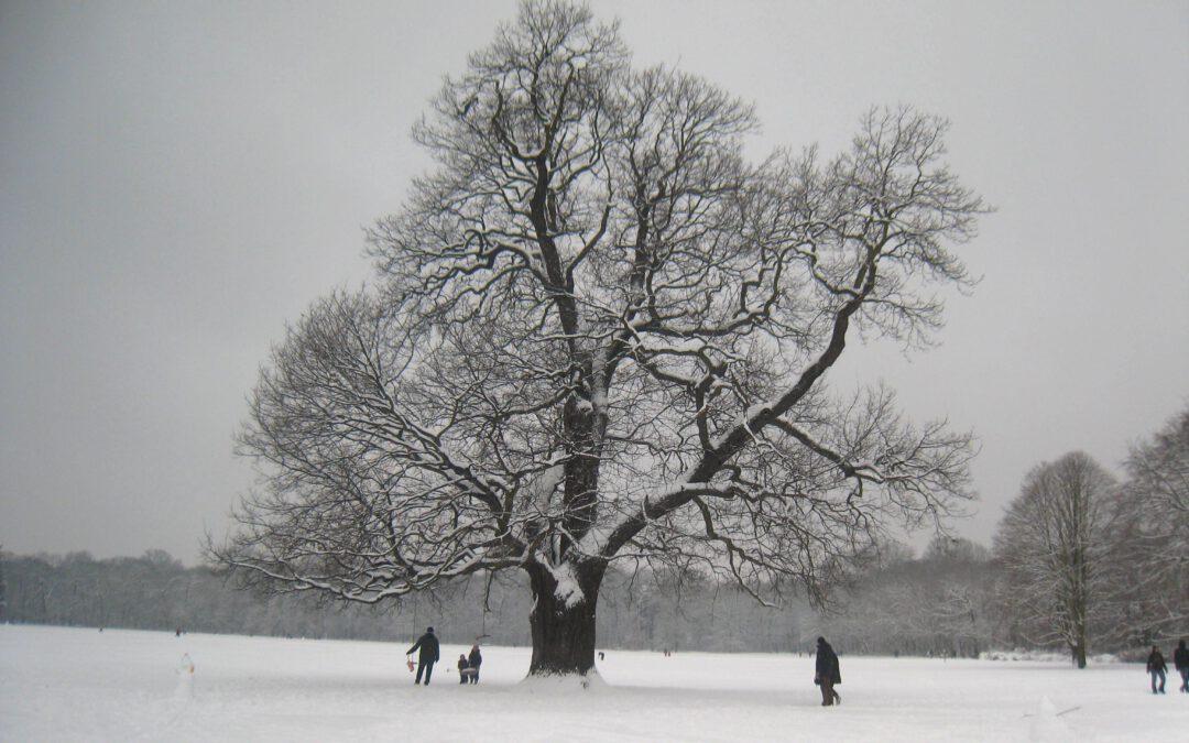 WinterEiche_GS_2021